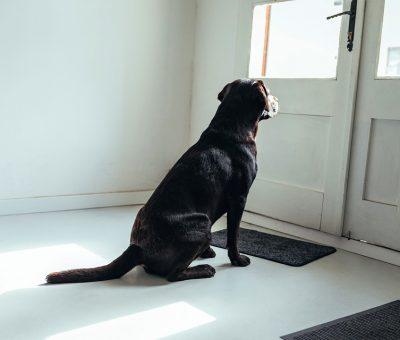 10 conseils pour bien dresser votre chien