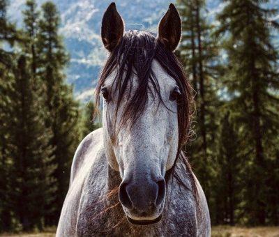 Centre de remise en forme chevaux